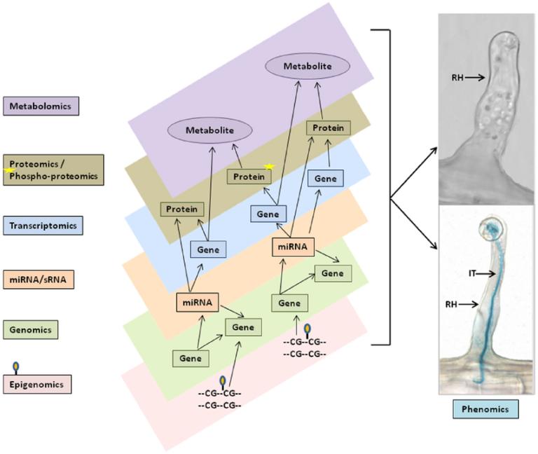 nutrigenomics-figure-1-768x648