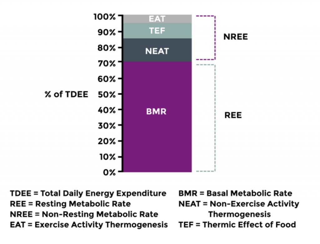 calculadora metabolismo basal harris benedict métodos de mejora